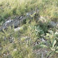 Dsc 0927 dolmen des vezinies salles la source 24 mai 2012
