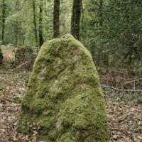 Dsc 3247 menhir le royal foret de carnoet quimperle
