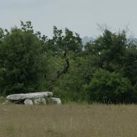 Dsc0579 dolmen de la rougie a livernon 03 06 2018 copie